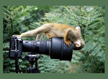 macaco olha camera.JPG